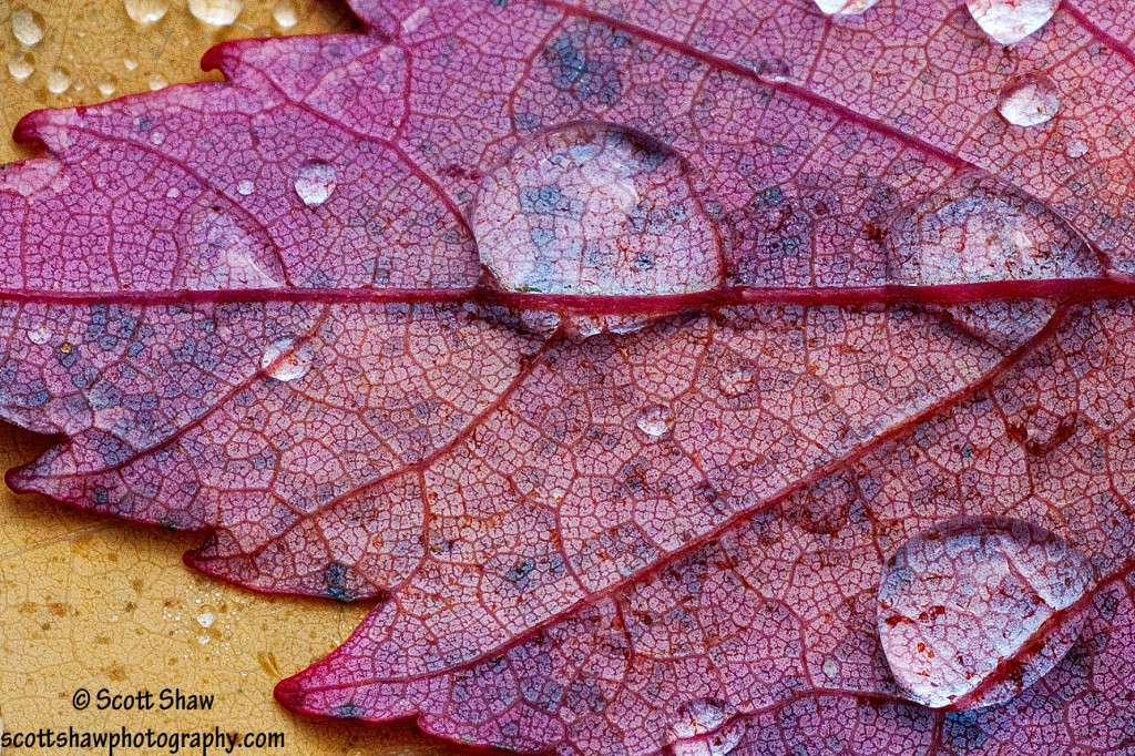 Leaves and Dew Drops