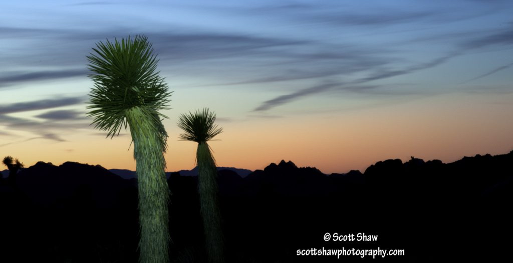 Light Painted Palms, Joshua Tree National Park