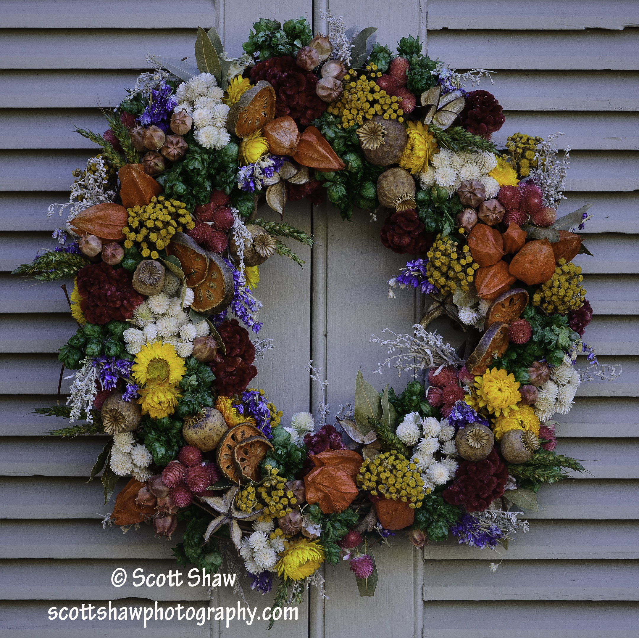 Williamsburg Christmas Wreath #1